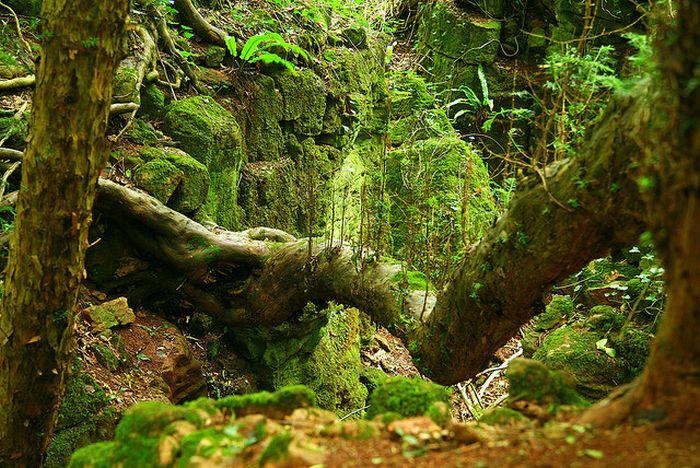 Лес из сказок толкиена