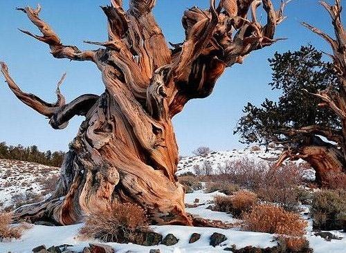 Блог самые потрясающие деревья мира